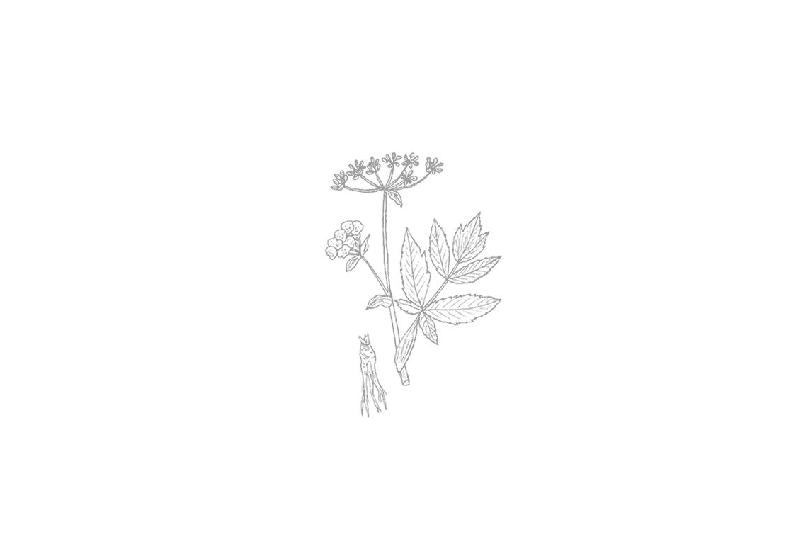 Drebbel Gin Botanicals